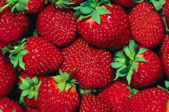 strawberry1-1